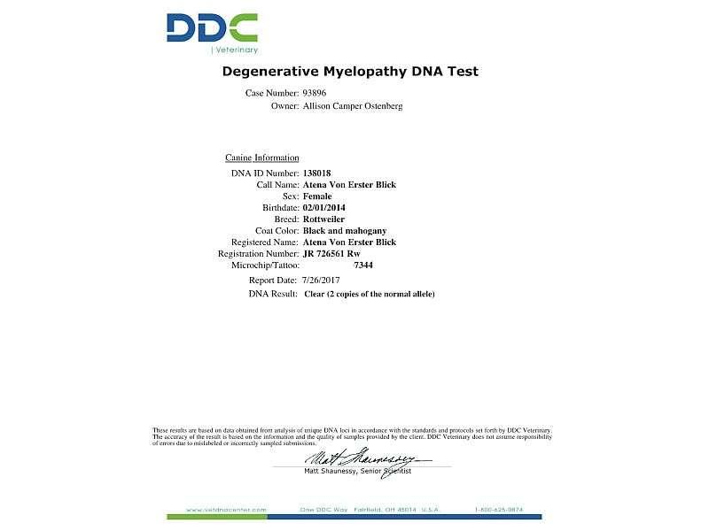 Atena- Degenerative Myelopathy DNA Results