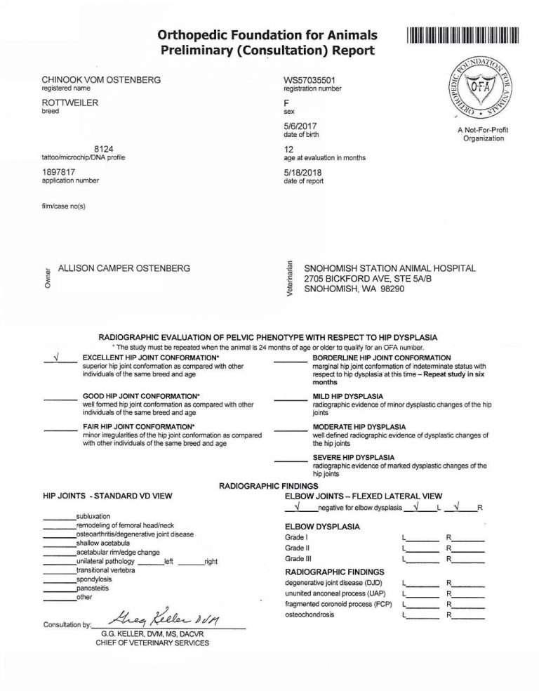 Chinook Vom Ostenberg_OFA HD ED Preliminary