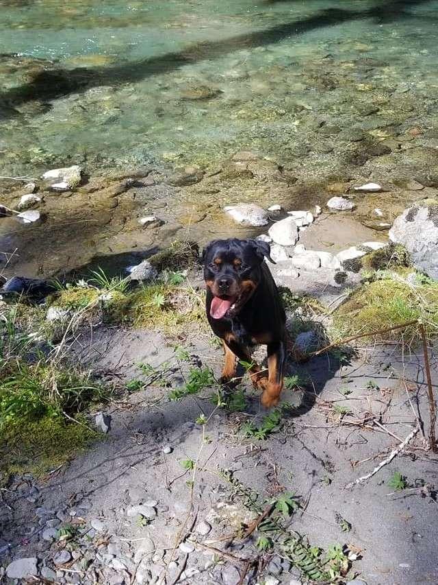 Ostenberg Rottweilers__Toscano_x_Alica(208)