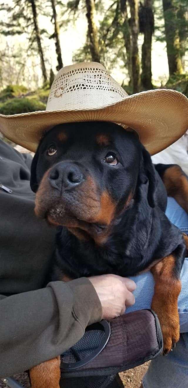 Ostenberg Rottweilers__Toscano_x_Alica(209)